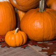 Pumpkins indian corn and fall leaves — Stock Photo #36036437