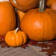 Pumpkins indian corn and fall leaves — Stockfoto #36036437