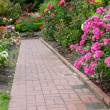 Brick walkway with rose plants — Stock Photo #48015529