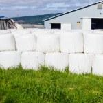 White plastic bales of hay — Stock Photo #48441603