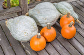 Pumpkins and blue hubbard squashes — Stock Photo