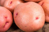 Red potatoes close up macro — Stock Photo