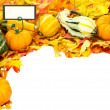 Fall or Thanksgiving or Halloween decoration isolated on white — Stock Photo #9470182