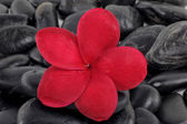 Zen stones with red frangipani flower — Stock Photo