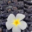 Zen stones with white frangipani flower — Stock Photo