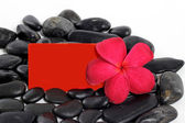 Zen stones and Red frangipani flower with text space card isolat — Stock Photo