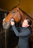 Grooming horse — Stock Photo