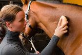 Grooming häst — Stockfoto