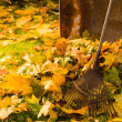 Stock Photo: Leaf pile and rake