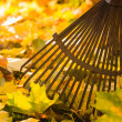 Stock Photo: Rake and leafs