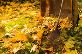 Leaf pile and rake — Foto Stock