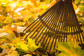 Rake and leafs — Stock Photo