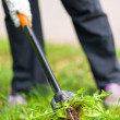 Stock Photo: Wompulling weeds