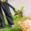Woman pulling weeds — Stock Photo