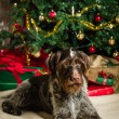 Dog and Christmas tree — Stock Photo #35241585