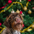 Dog and Christmas tree — Stock Photo #35243015