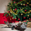 Puppy and Christmas tree — 图库照片