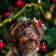 Dog and Christmas tree — Stock Photo