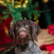 Puppy and Christmas tree — Stockfoto