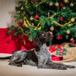 Puppy and Christmas tree — Stock Photo