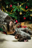 Dogs and Christmas tree — Stock fotografie