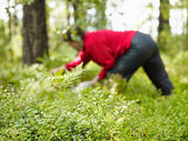 Woman pick up blueberries — Stock Photo