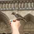 Bird on notre dame — Stockfoto