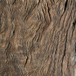 Stock Photo: Antique wood seasoned
