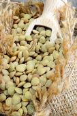 干小扁豆 — 图库照片