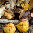 Roasted chestnuts — Foto Stock