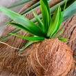 Coconut — Stock Photo #41636755