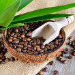 Coffe beans in coconut — Stock Photo #41786819