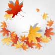 Autumn Leaves Background. — Image vectorielle