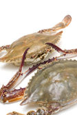 Seafood--Swimming crab — Stock Photo