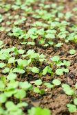 New seedling — Stock Photo