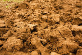 Soil background — Stockfoto