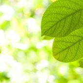 Fresh leaves in bright light — Stock Photo