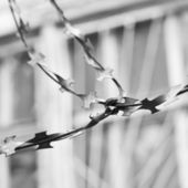 Barbed wire black and white — Stock Photo