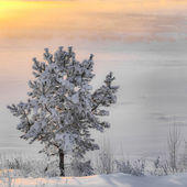 одинокое дерево зимой — Стоковое фото