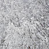 Kar dalları — Stok fotoğraf