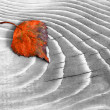 Orange leaves on a wooden surface — Stock Photo