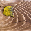 Yellow leaves on a wooden surface — Foto de Stock
