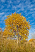 Branch with yellow leaves against the blue sky — Stock Photo