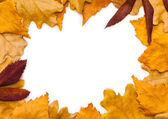 Frame of yellow leaves — Stock Photo
