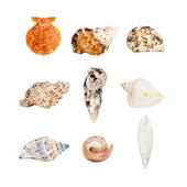 Various sea shells — Stock Photo