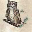 Owl on the branch — Stock Photo