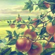 Summer landscape with apple branches — Stock Photo