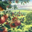 Summer landscape with apples — Stock Photo