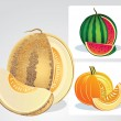 Melons — Stock Vector