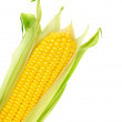 Ear of Corn — Stock Photo